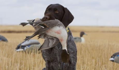 Dressage chasse pratique